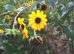 黄色のキレイな花