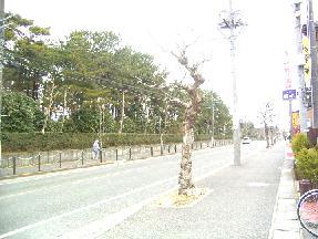 misemae080203.jpg