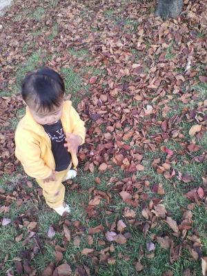 落ち葉じゅうたん