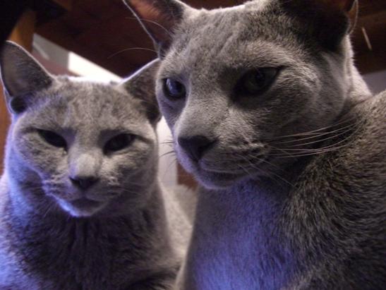 猫相の悪いふたり