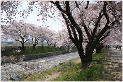 funakawaberi2009-4.jpg