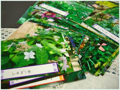 hana-gazou2009-5.jpg