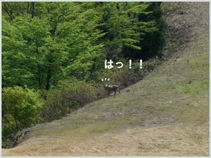 kamosika2009-5-5.jpg