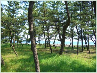 matubayasi2009-5.jpg