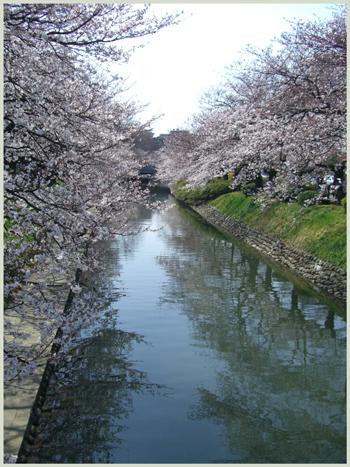 matukawa-sakura2009-4-2.jpg