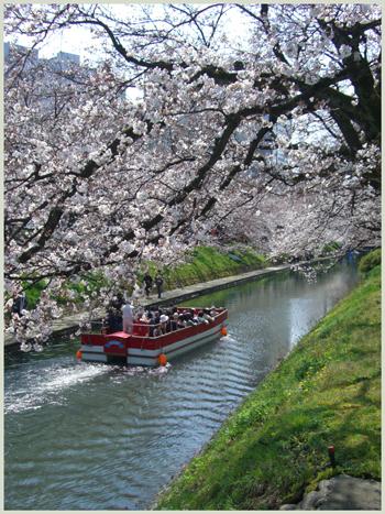 matukawa-sakura2009-4.jpg