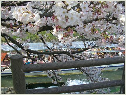 matukawa2009-4-7.jpg