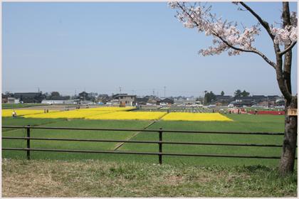 nanohanabatake2009-4.jpg