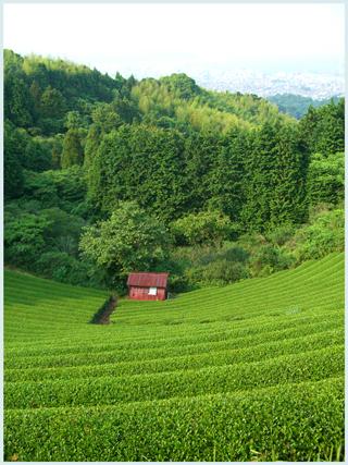 nihondairahoteru-2009-6-2.jpg