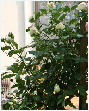 pie-ru2009-5nisi.jpg