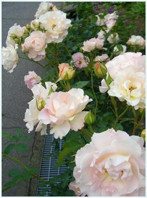 rokoko2009-6-2.jpg