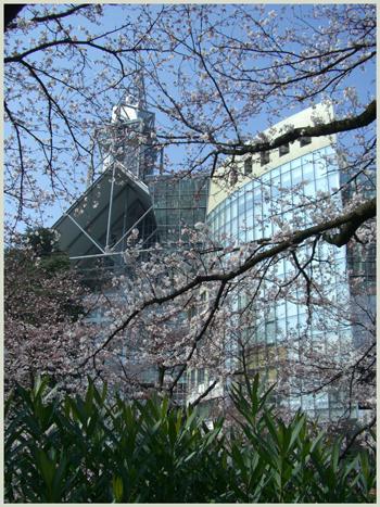 sakura-siyakusyo2009-4-4.jpg