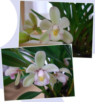 sinpi-sakura2009-6.jpg