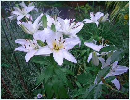 sukasiyuri2009-6.jpg