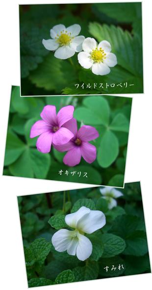 sumire-waisuto2009-5-1.jpg