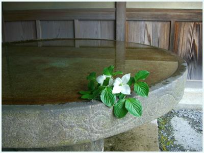 sunainosato-suibann2009-6.jpg
