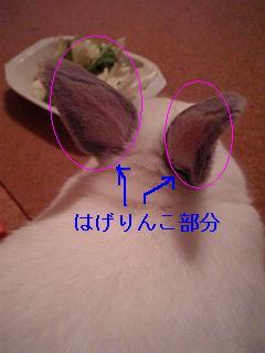 20060716011117.jpg