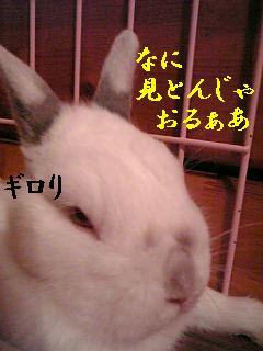 20060905221953.jpg