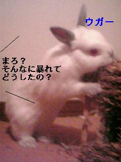 20060912132859.jpg