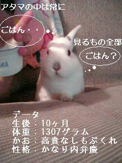 20061016011643.jpg