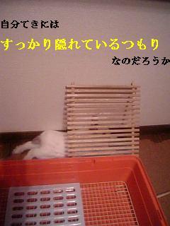 20061024032551.jpg