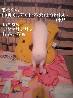 20061210174338.jpg