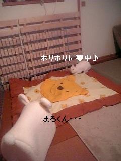 20061210174836.jpg