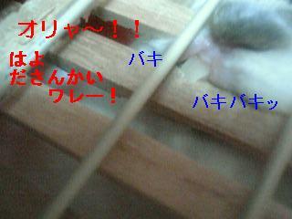 20070304154109.jpg