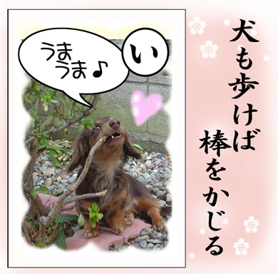 karuta-inu.jpg