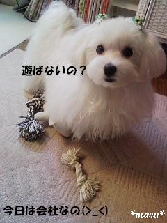 2009032504.jpg