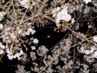 三日月と桜