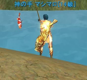 背中のはさっき釣った金色の錦鯉