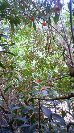 ヤマモモの木の上