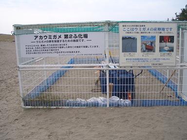 アカウミガメ孵化場
