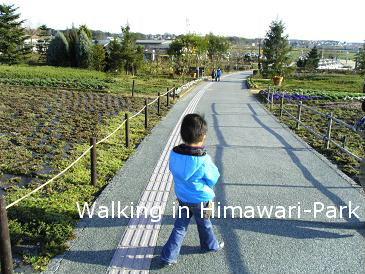 walk-himawari.jpg