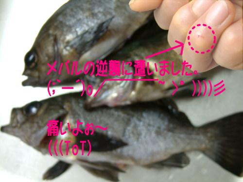 20060122194732.jpg
