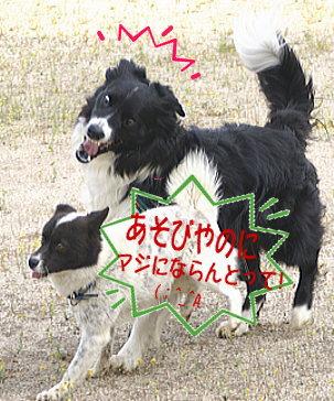 20070523154110.jpg