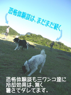 20070810124008.jpg