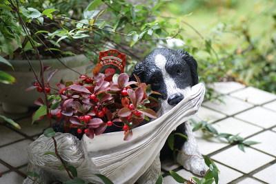 1101犬の植木鉢