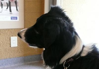 0130動物病院聞き耳