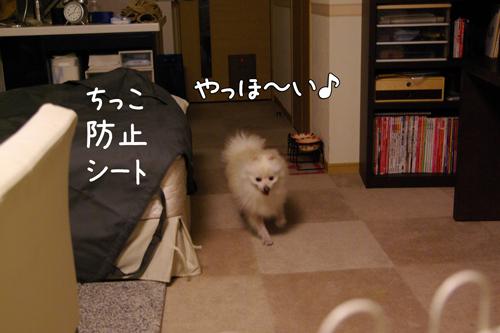 IMGP5096.jpg