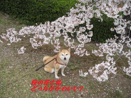 024桜の中