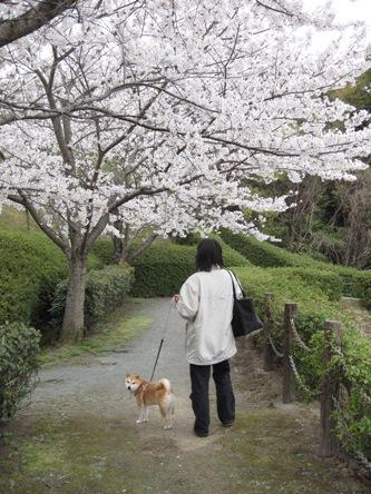 029桜の散歩道
