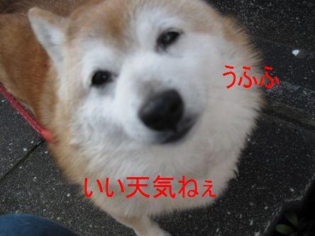 018くりちゃん