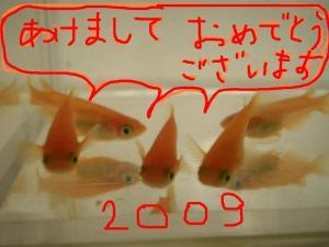 PC270047.jpg