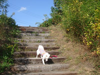 エル、階段降りれるんだ!成長したね。
