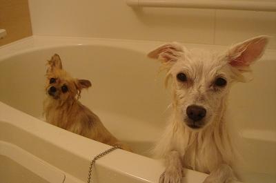 マミ&エルお風呂♪