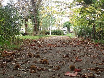 あの森の小道