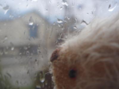 雨が強くなってきたよ~