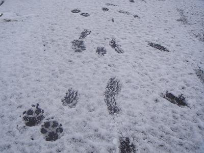 足跡って、歩き方もわかるのね。